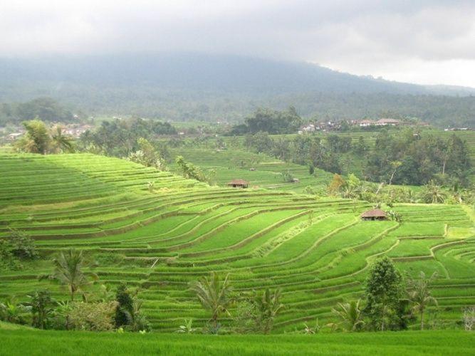 Bali Est