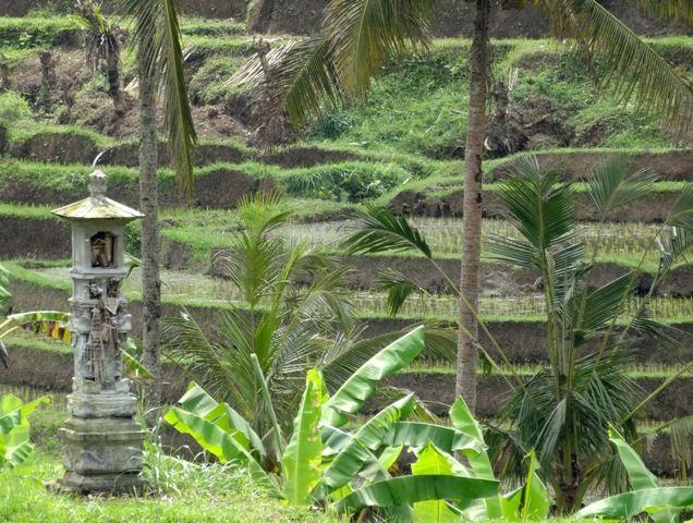 Le subak et la gestion traditionnelle de l'eau à Bali6 min read